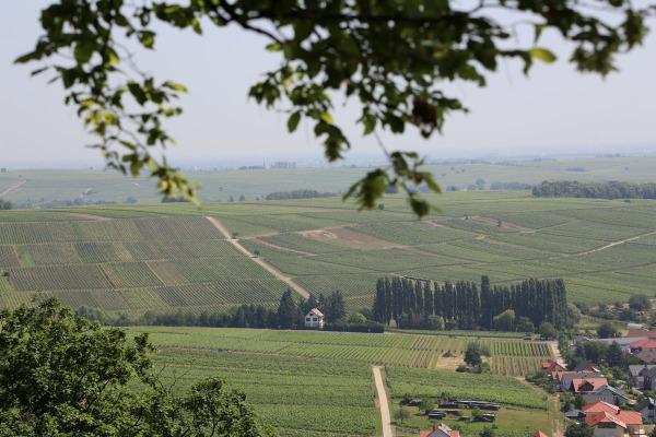 Blick in die Weinberge von der Burg Landeck aus (Foto: wukomm).