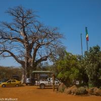 Baobabs und wilde Tiere