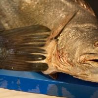Wie zerlegt man Adlerfische?